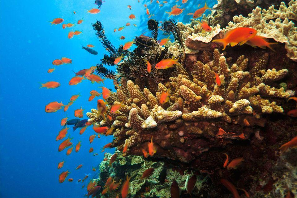 La vie sous-marine , La grande barrière de corail , Australie