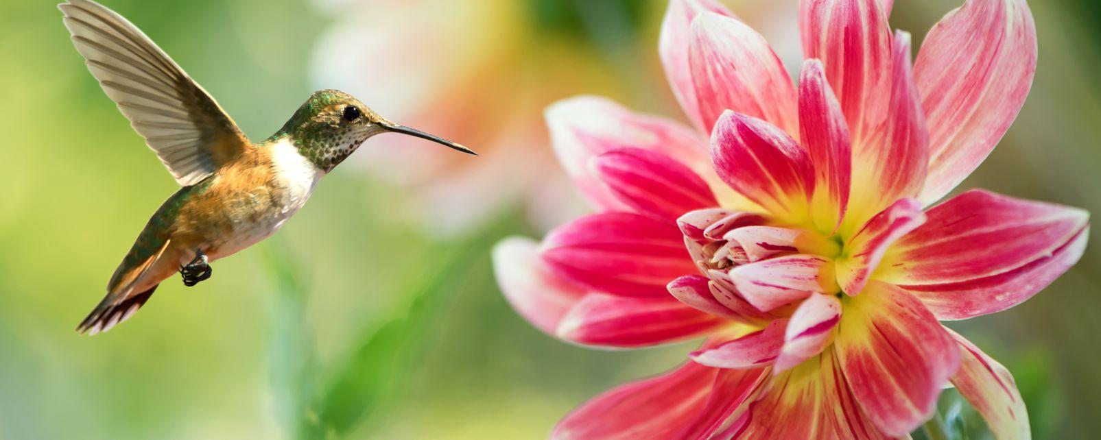 La faune et la flore, grande-terre, petite-terre, mayotte, afrique, océan indien, mahoré, faune, animal, oiseau, oiseau-mouche, colibri, fleur, flore