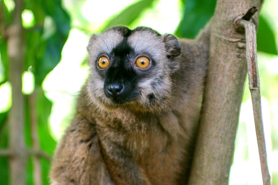 , Wildlife on land, The fauna and flora, Mayotte