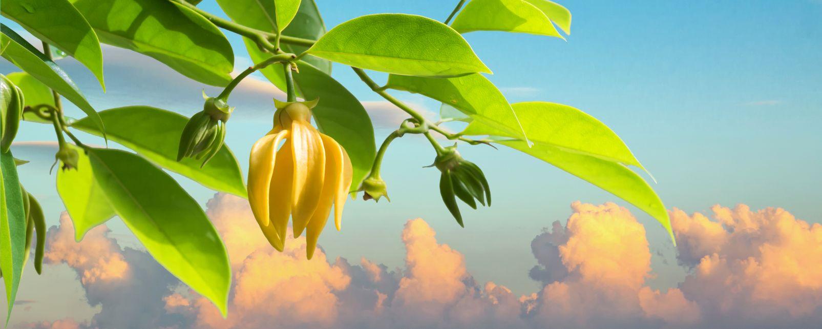 Die Pflanzenwelt, Die Flora, Die Fauna und Flora, Mayotte