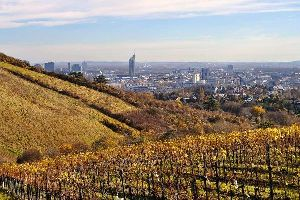 Il Wienerwald , Le vigne , Austria