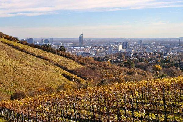 The Wienerwald , The vineyards , Austria