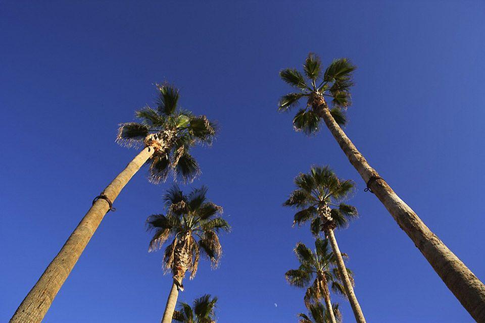 Les palmiers de coco, Les baleines grises, les cerfs royaux de la sierra, les vautours du désert et les cactus., La faune et la flore, Basse Californie