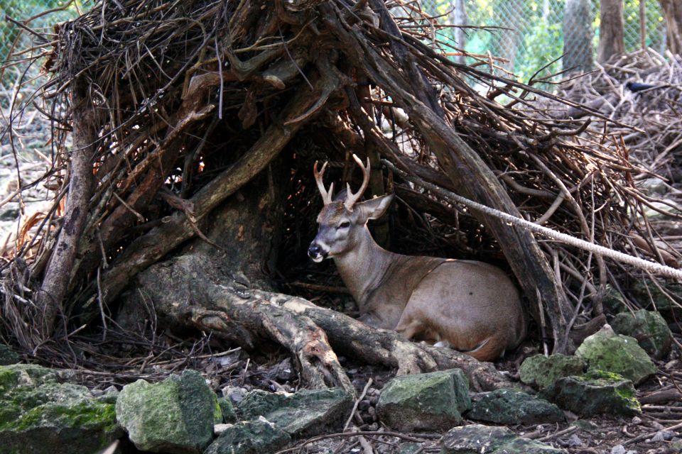 La faune et la flore, mexique, cerf, basse-californie, mammifère, animal, faune