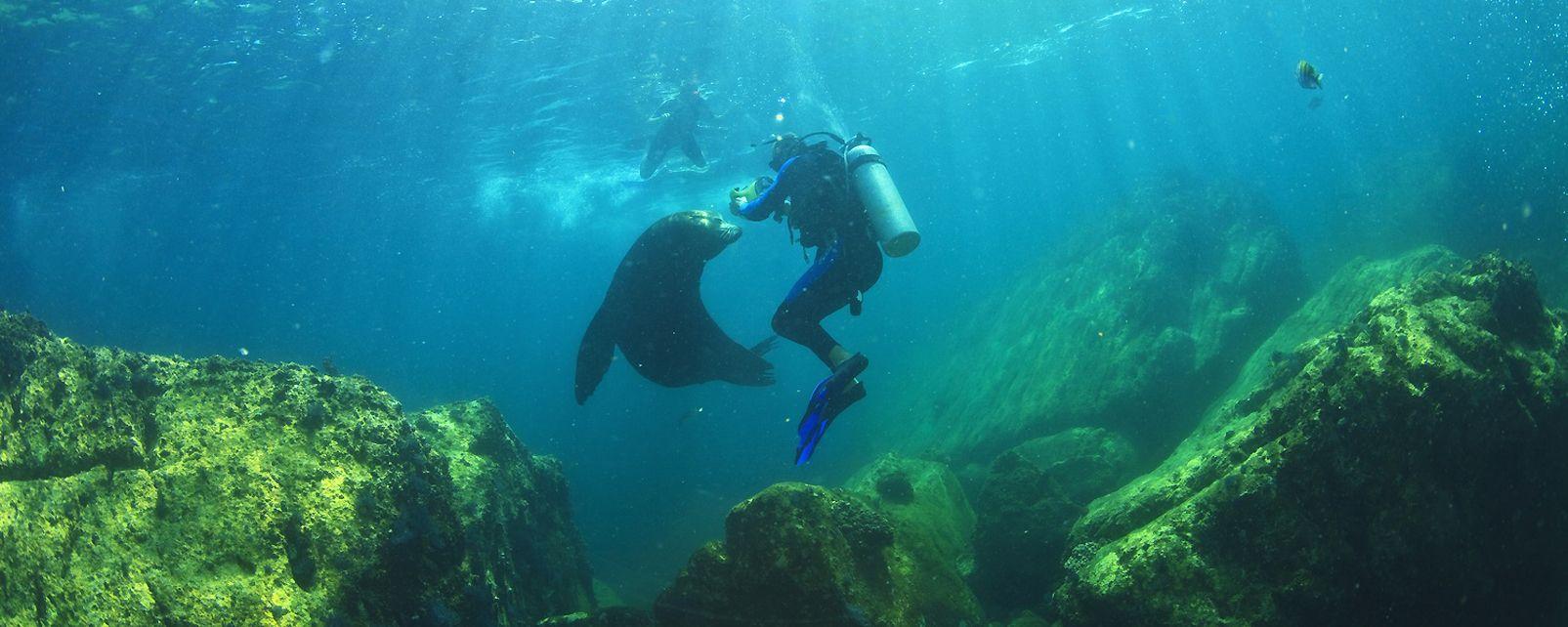 Les activités et les loisirs, mexique, basse-californie, amérique, sous-marin, plongée, lion de mer, faune, mammifère, animal, plongeur
