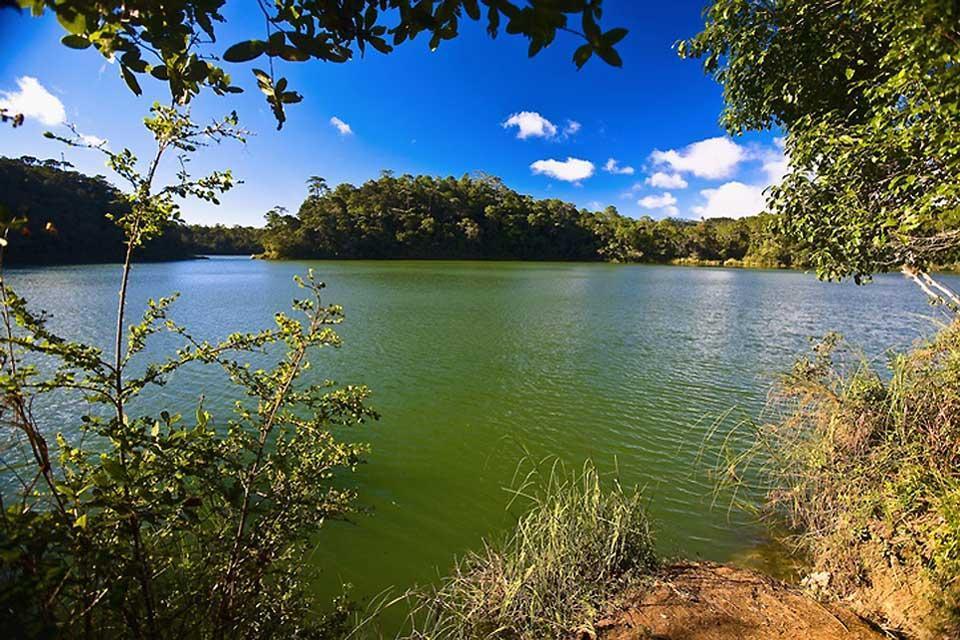 Laguna di Montebello , Flora e fauna di Montebello , Messico