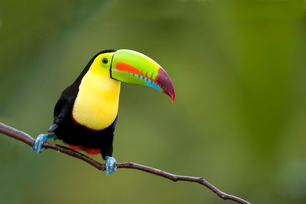 Wildlife, The fauna and flora, Continental Mexico