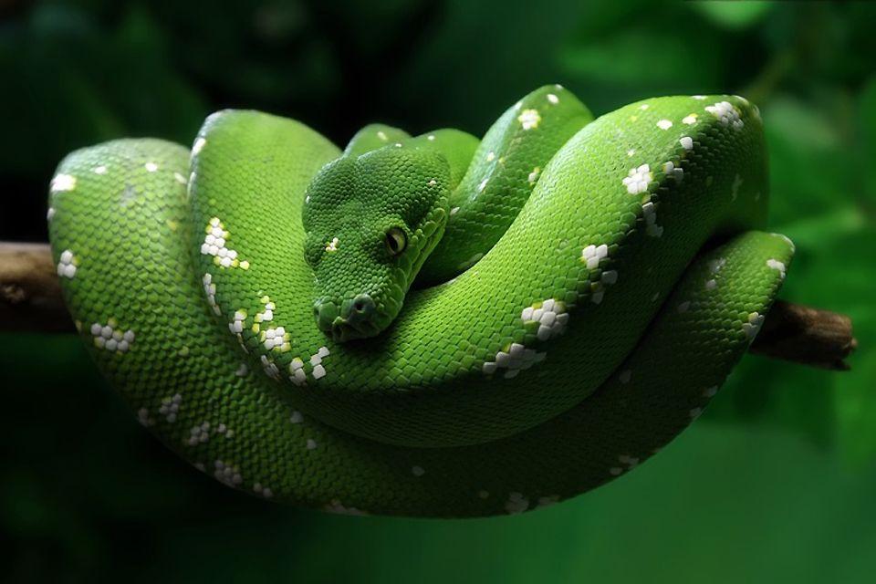 I serpenti del Messico, La fauna, La fauna e la flora, Messico Continentale