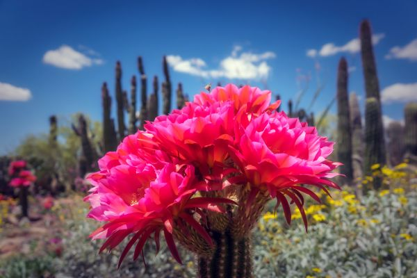Plant life, Flora, The fauna and flora, Continental Mexico