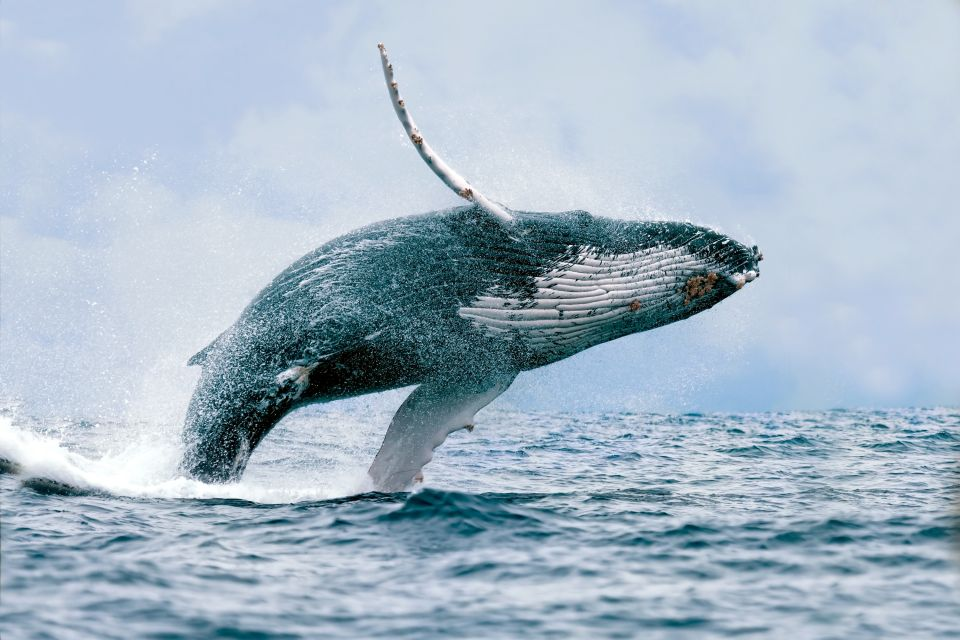 Le balene., Le balene, La fauna e la flora, Messico Continentale