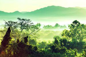 La foresta, La giungla, I paesaggi, Messico Yucatán