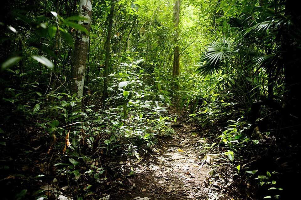 La giungla , Giungla del Messico , Messico