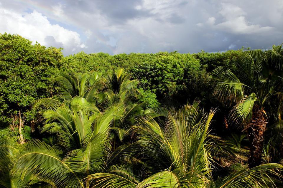 La giungla , Le piante dello Yucatan , Messico
