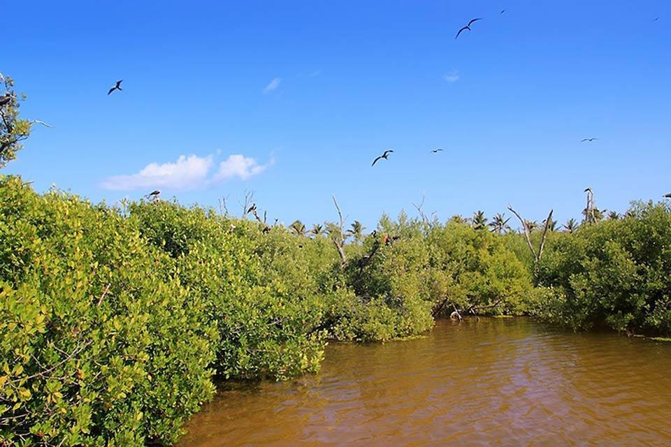 La giungla , Le riserve dello Yucatan , Messico