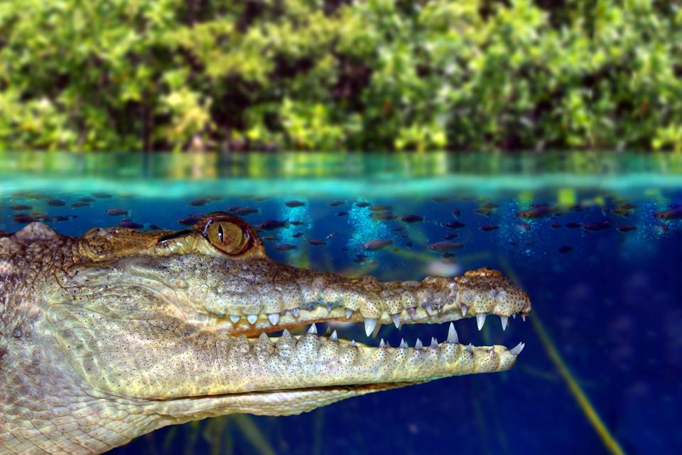 Sian Ka An Biosphere Reserve Yucatan Mexico