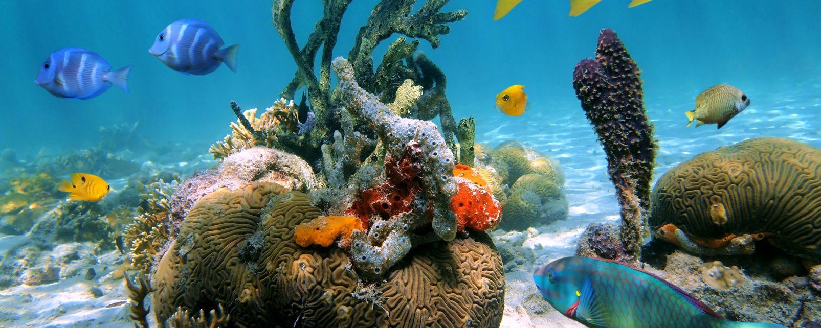 I fondali marini, Le scogliere sottomarine dell'isola di Cozumel, La fauna e la flora, Messico Yucatán