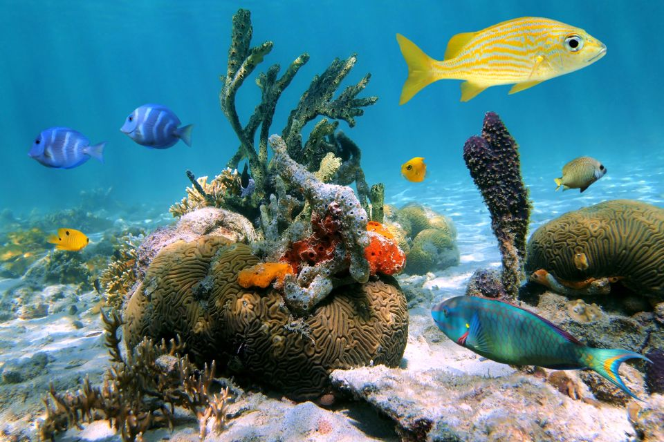 The sea floor, The under-water coral reefs of Cozumel Island, The fauna and flora, Yucatan