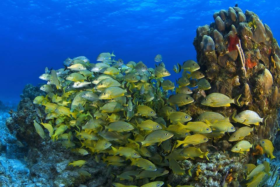 The under-water coral reefs of Cozumel Island.  , Mexico