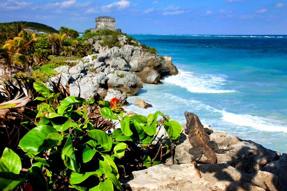 Un'iguana, Le iguane, La fauna e la flora, Messico Yucatán