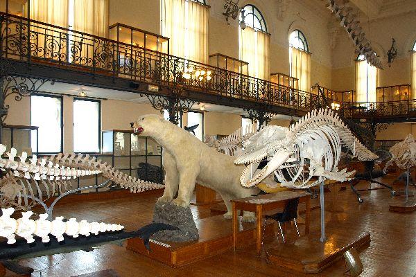 Il Museo Oceanografico , Montecarlo