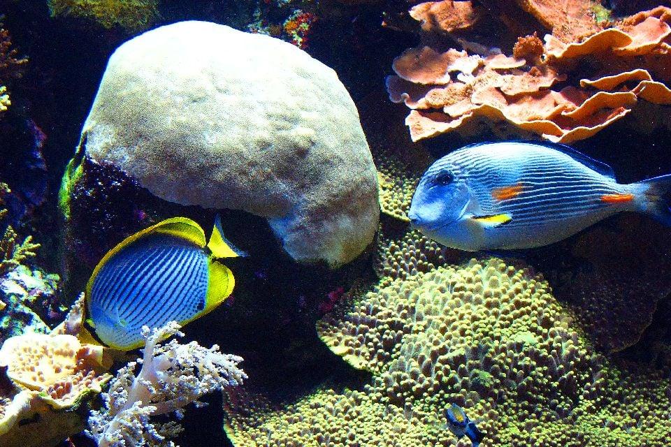 Das Ozeanographische Museum , Monaco