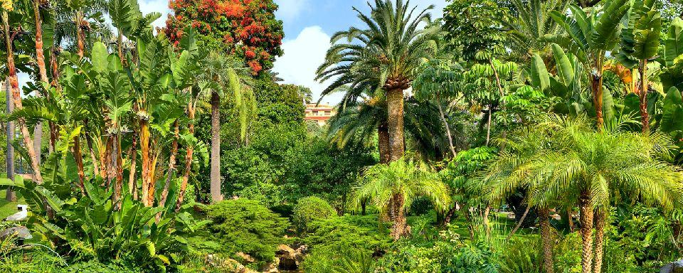 Le jardin exotique monaco for Le jardin japonais monaco