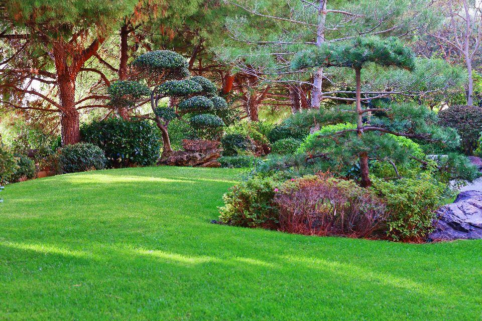 Il giardino giapponese monte carlo montecarlo for Giardino giapponesi