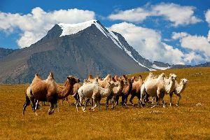 La meseta del Khangai , La meseta de Khangai, Mongolia , Mongolia