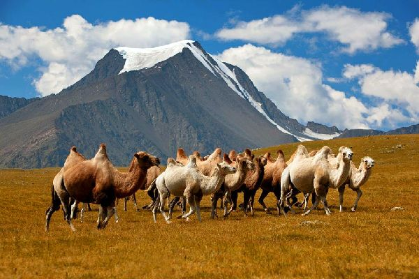 Das Khangai-Plateau , Das Khangai-Plateau, Mongolei , Mongolei