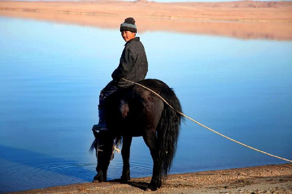 Die Provinz Bulgan , Mongolisches Pferd, Region Bulgan , Mongolei