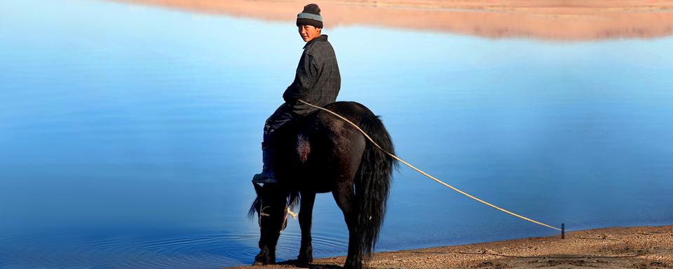 Caballo mongol, regi�n de Bulgan