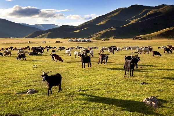 Die Provinz Ovörkhangai , Die Region Ovörkhangaï, Mongolei , Mongolei