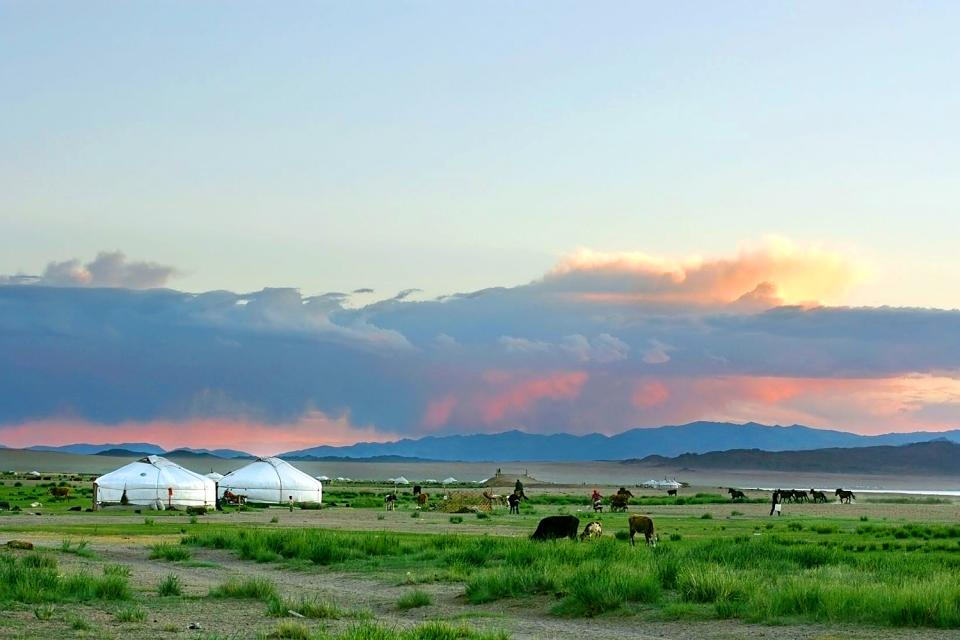 The steppes , Mongolia