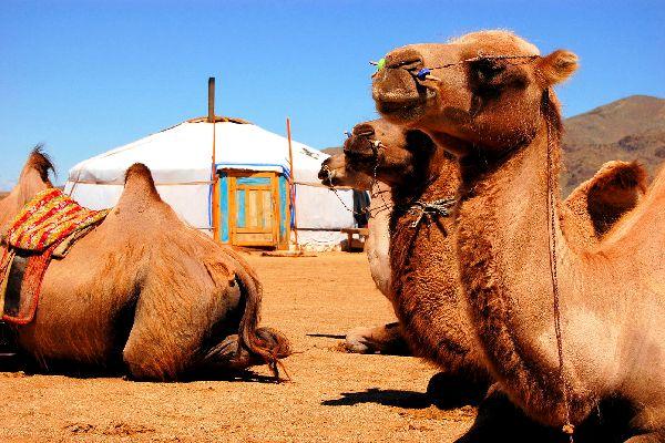 Le désert de Gobi , Les nomades du désert , Mongolie