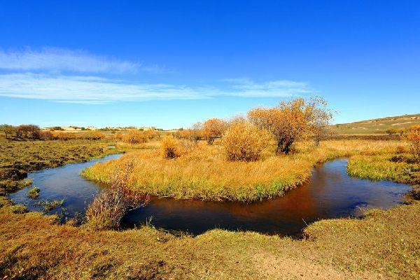 Steppes wildlife , The steppes of Dornod , Mongolia