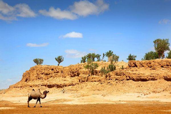 Wildlife in the Gobi desert , The Great Gobi Reserve , Mongolia