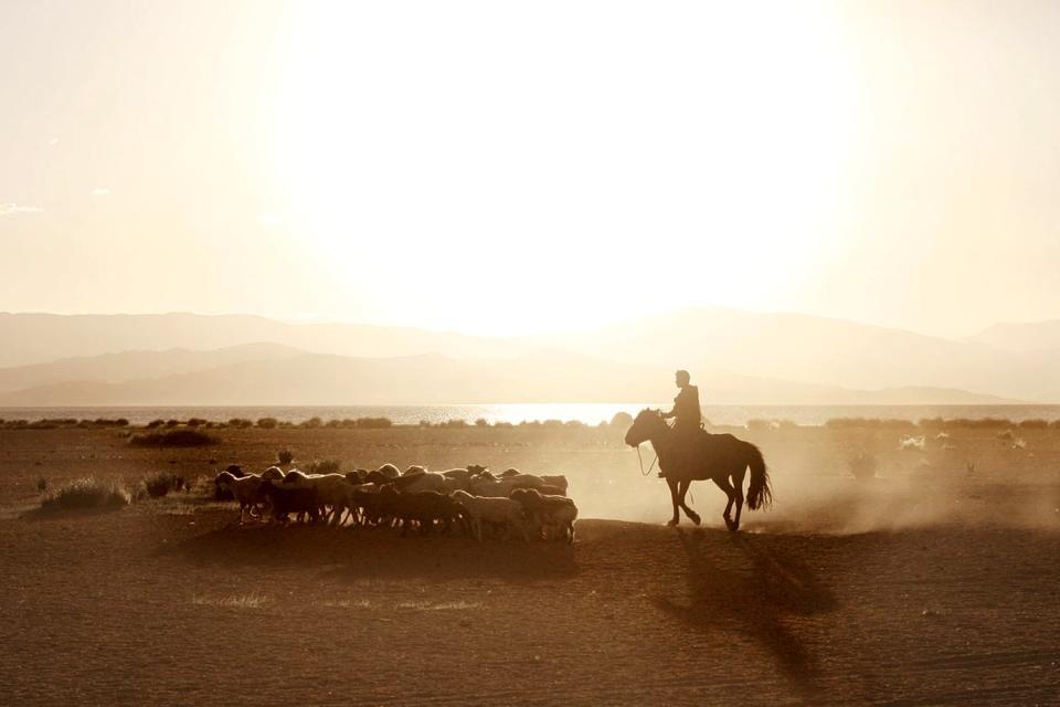 The nomads , Mongolia