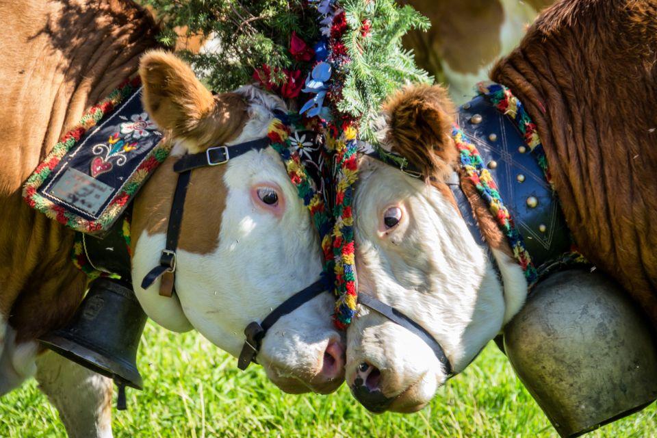 Eine prämierte Kuh in Tirol, Die Tierwelt, Die Fauna und Flora, Österreich
