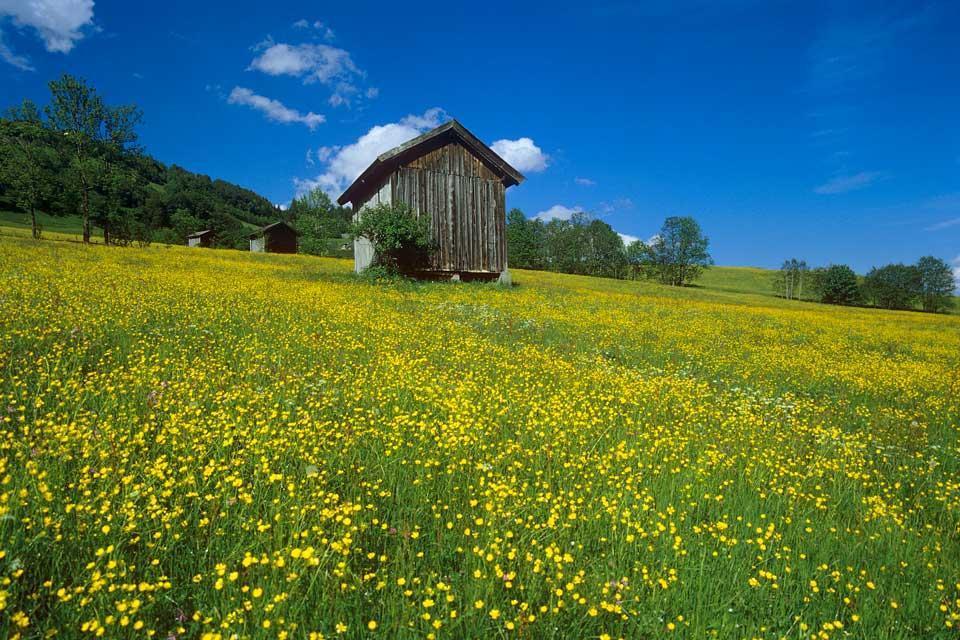 Flora , Austria