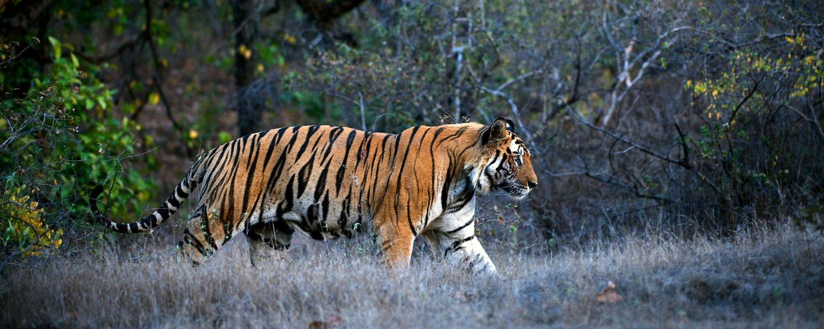 Wildlife, The fauna and flora, Myanmar