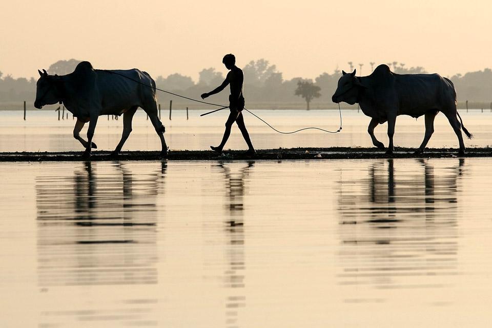 Wildlife , Burma
