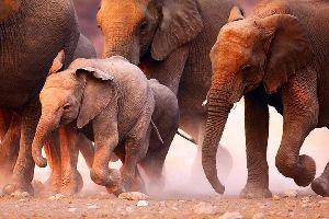 La fauna , La fauna, Namibia , Namibia