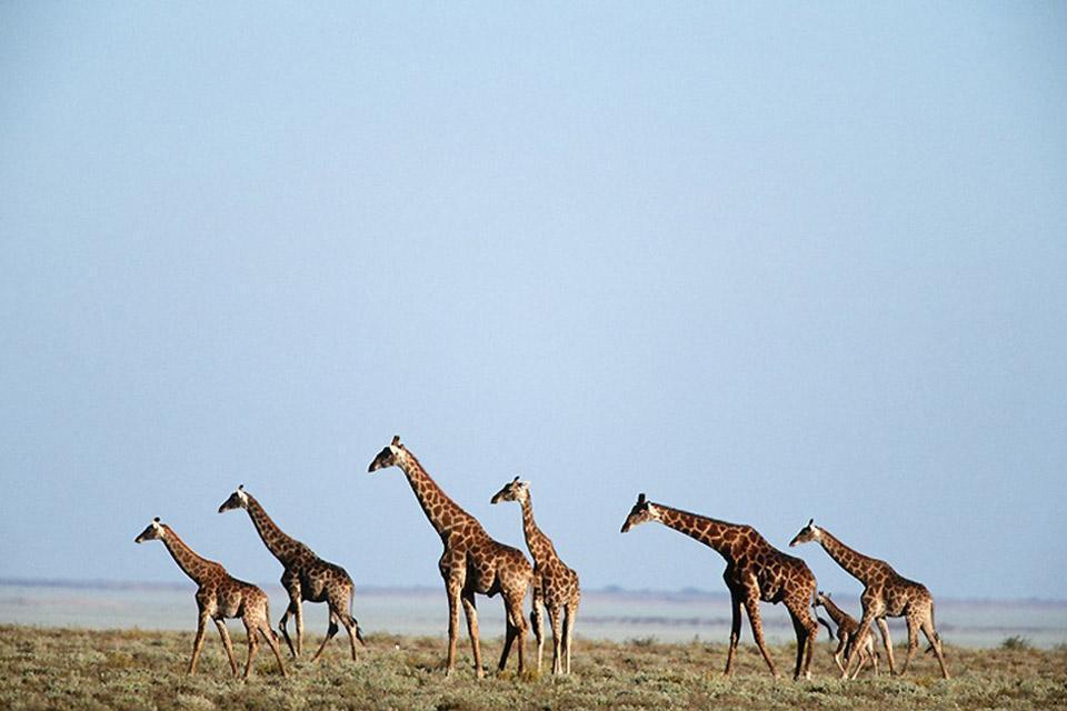 La faune , Namibie