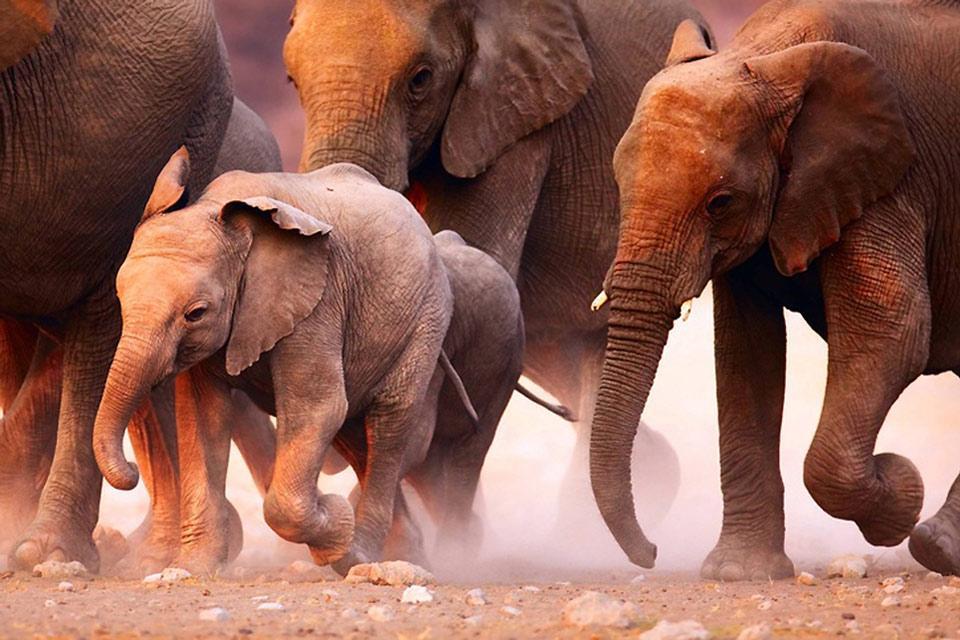 La faune , La faune, Namibie , Namibie