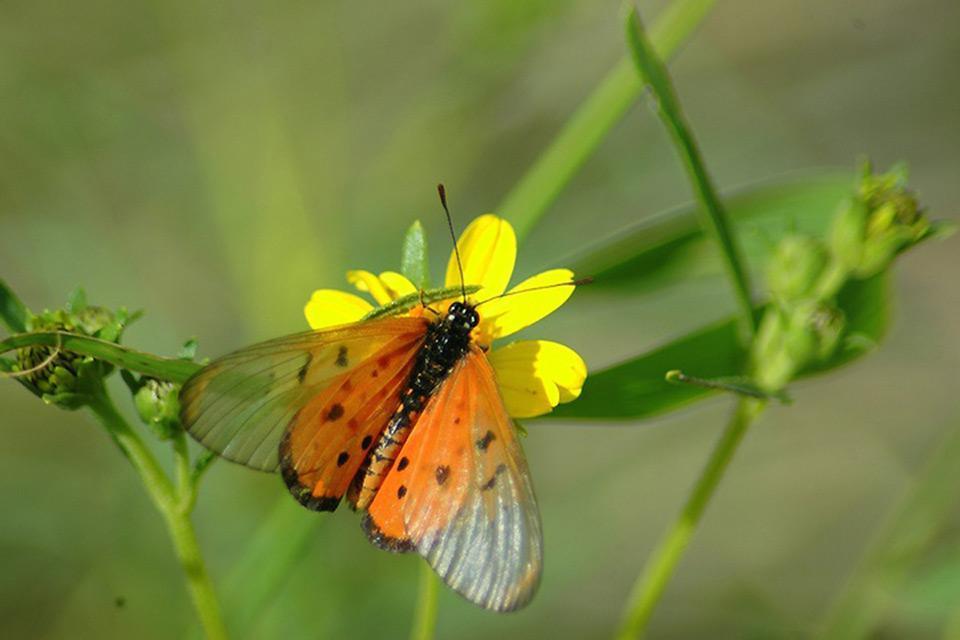 La flore , Namibie