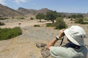 La caza , Namibia