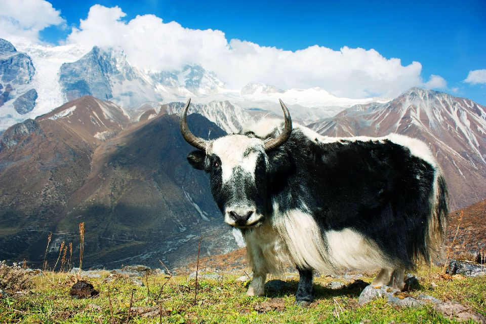 Los valles de Helambu y Langtang , Nepal
