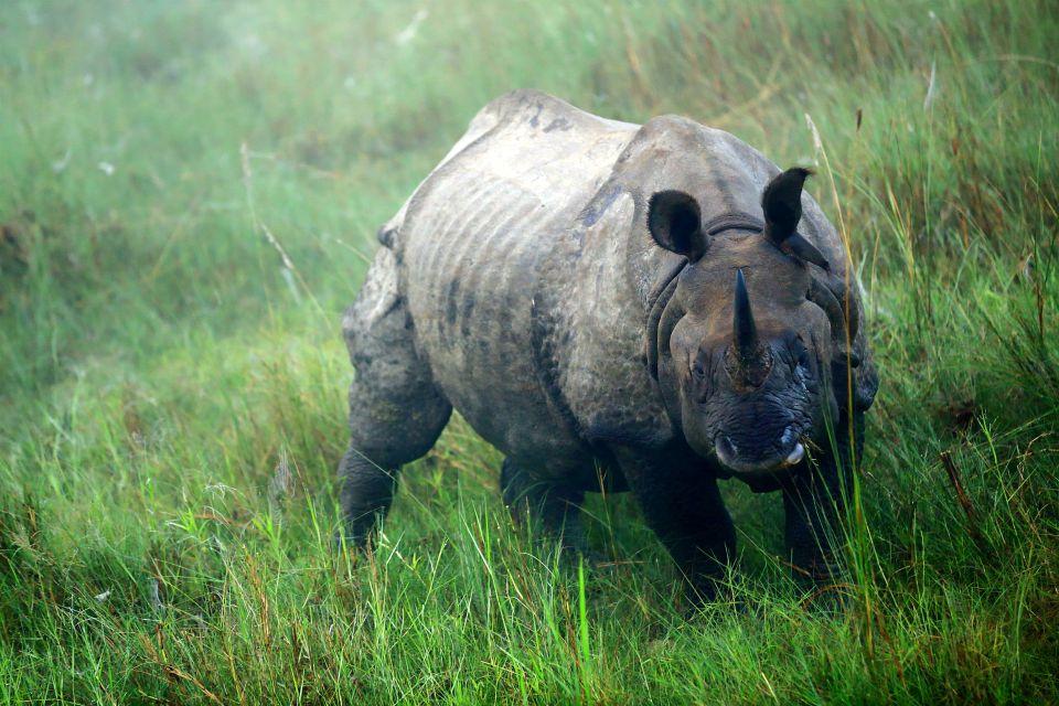 La faune et la flore, Népal, nature, asie, mammifère, faune