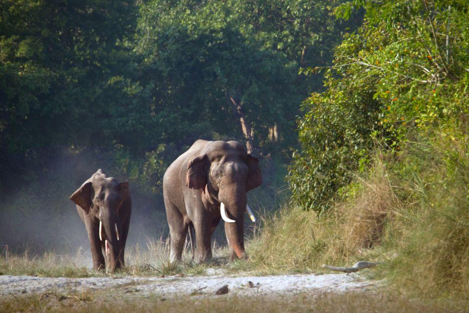La faune et la flore, Népal, nature, asie, mammifère, faune, éléphant