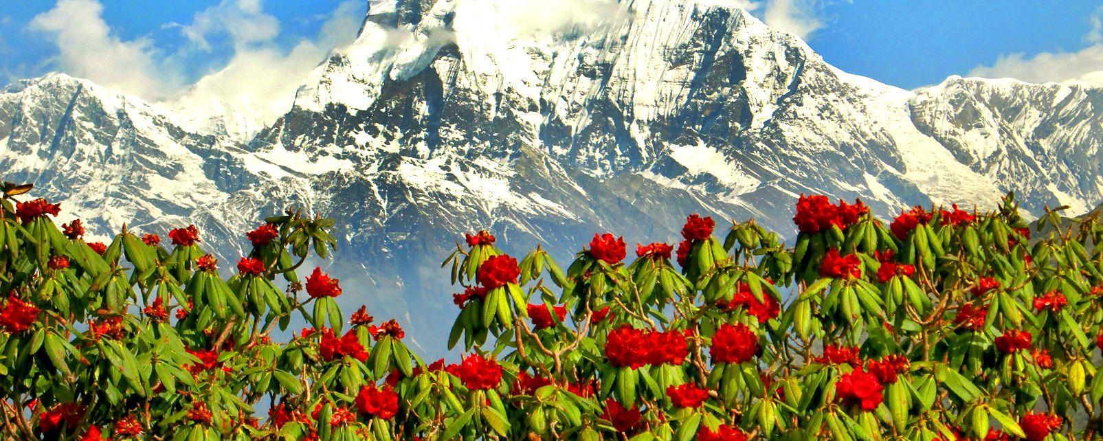 La flora , La flora, Nepal , Nepal